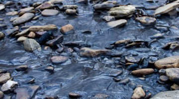 Coal Slurry: Thick, Black, Toxic